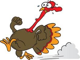 Running-Turkey-56072