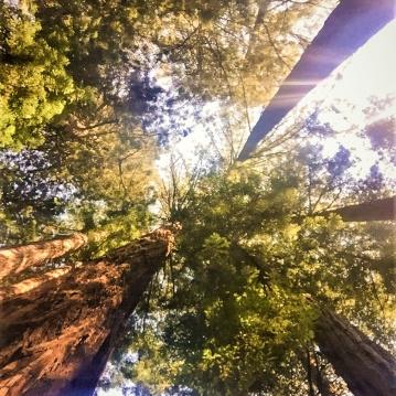 muir-woods_edited